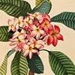 Abbildung einer Pflanze
