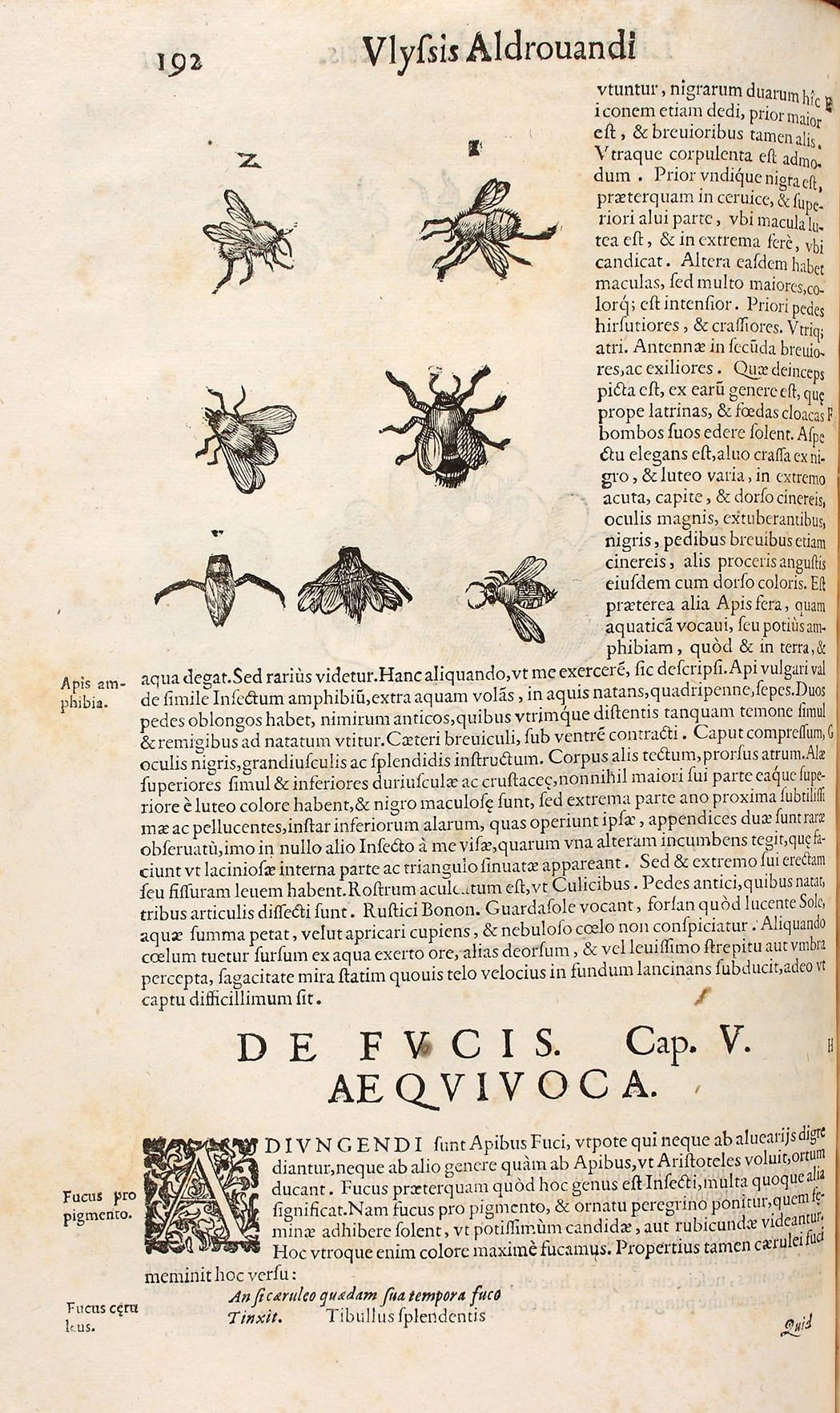 9.1.-15.1.: Maria Sibylla Merian (1647-1717 ...